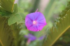 "Saatchi Art Artist Mahsa Watercolor; Photography, ""Purple Flower"" #art"
