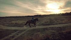 a canter is the cure for every evil
