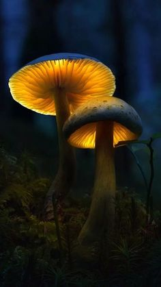 German photographer Martin Pfister captures mystical and magical Glowing Mushrooms in his delightful sequence of macro fungi photos. Macro Photography Tips, Levitation Photography, Forest Photography, Texture Photography, Abstract Photography, Photography Flowers, Experimental Photography, Photography Aesthetic, Photography Portraits