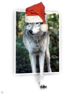 kerstillustratie wolf Angel