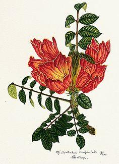 Riziki Kateya's Botanical Illustration