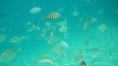 Snorkel and discover many other fish at the Wrecks