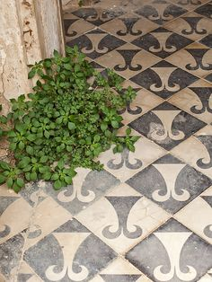 antique patterned tile floor...Gardener's Desire