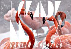 Darlin' – Il Grande Mix!