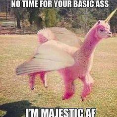 My new spirit animal #llamacorn #majesticaf #notnotawesome #basicaf
