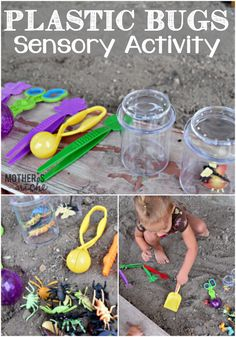 Insect Sensory activity