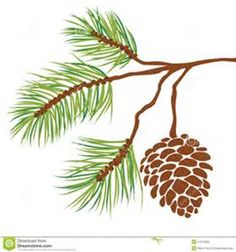 Pine tree branch and cone vector. Illustration of fir tree branch with cone isol , Pine Tattoo, Tree Roots Tattoo, Pine Cone Art, Pine Cones, Tree Tattoo Designs, Tree Designs, Pine Branch, Tree Branches, Fir Tree