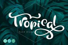 Welcome to Happy Letters shop :) Unique handmade calligraphic Tropical Summer Font is modern display font with alternative flourish lowercase and Handwritten Fonts, New Fonts, Script Fonts, Calligraphy Fonts, Fonts Gratis, Corel X7, Comic Sans Ms, Summer Font, Tutorial Photoshop