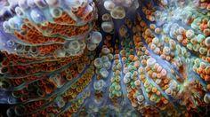 macro corais ovos[8]