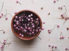 I had no idea pink peppercorns were so pretty!  by @laurenlcooper in #DSPINK by designsponge