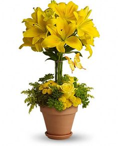 Yellow Fellow - lily topiary and yellow flowers