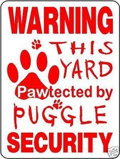 Google Image Result for http://2.bp.blogspot.com/-v8oRqJGAWHM/TWhW5hJJizI/AAAAAAAABgA/SnZqEwf5TxI/s400/puggle-dog-security-aluminum-sign-decal-d3214_160400158321.jpg