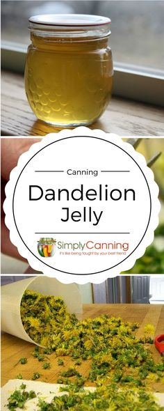 Making Dandelion jelly is fun! Easy Canning Instructions here. What does it taste like? Well, it tastes a little like honey. I've also seen it described as sunshine... or laughter! Makes great gift jars. www.simplycanning... www.simplycanning.com/
