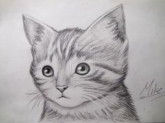 drawing drawings kitty deviantart cat pencil realistic face animal animals cats sketch simple google funny sketches kittens kitten amazing flowers