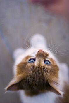i need this kitty