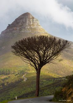 Lion's Head; Cape To