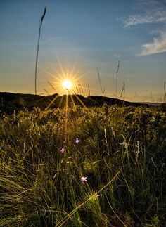 Images of Alberta's Foothills. Photographed by award winning photographer, Neil Jolly. Stars And Moon, Wind Turbine, Sunsets, Fields, Landscape, Space, Amazing, Flowers, Plants
