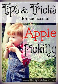 Tips and Tricks for Successful Apple Picking.  Apple Picking Season Starts the last weekend in August!  Get ready for a fun and successful trip with these tips and tricks!