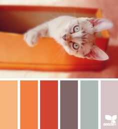 Catsparella: Cat-Inspired Color Palettes Match Cute Kitties With Correct Hues