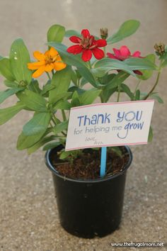 Here's a super easy (and cheap) teacher appreciation flower gift!