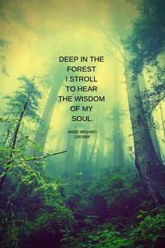 """nature quote for the forest lover with beautiful soulful trees, greens, and fog.""""Deep in the forest I stroll to hear the wisdom of my soul. Green Nature Quotes, Mother Nature Quotes, Green Quotes, Nature Images, Nature Pictures, Forest Quotes, Soul Quotes, Earth Quotes, Wisdom Quotes"""