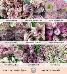 Mayesh Cooler Picks - Summer -   Lavender // top: blush scabiosa, lavender frilly tulips, blush ball dahlias | middle: mauve astrantia, pink + white clematis, lavender ranunculus | bottom: picotee ranunculus, lavender lilac, allium siculum