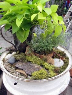 Cool little garden made in a hub cap