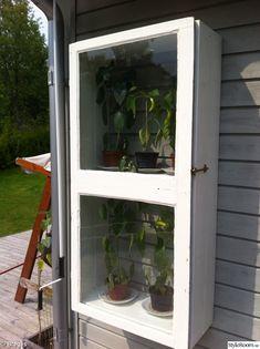litet växthus,chiliplanta