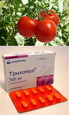 Спасаем и лечим помидоры. | ЖЕНСКИЙ МИР