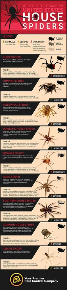 How To Identify Common Poisonous Spiders In Your Home #gardenpestsidentification