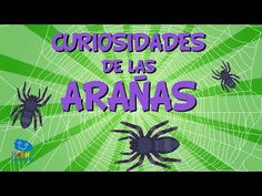 Did you know that spiders are one of the animals that most people are scared of? There are millions of people who have arachnophobia, meaning that when they . Spider Facts For Kids, Spiders For Kids, Animal Facts For Kids, Insect Crafts, Spider Crafts, Marriage Prayer, Animal Habitats, Educational Videos, Learn English