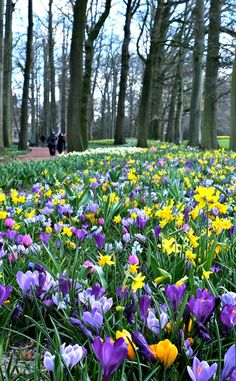 Celebrate spring in Brussels, Belgium at the Groot-Bijgaarden castle and gardens for the big flower show - Floralia Brussels. Big Flowers, Spring Flowers, Beautiful Flowers, Mulch Around Trees, Lawn Soil, Planting Marigolds, Nature View, Love Garden, Nature Aesthetic