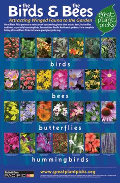 Plants That Celebrate Spring: Link to Great Plant Picks Lists and Search Page