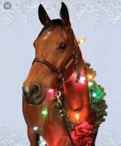 Wrapped up for Christmas Christmas Horses, Cowboy Christmas, Christmas Animals, Country Christmas, Christmas Humor, Winter Christmas, Xmas, Cute Horses, Pretty Horses