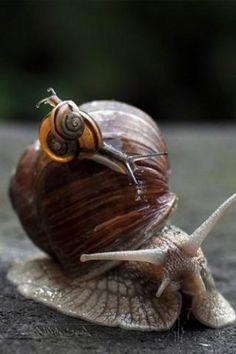 snailsss