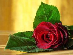 25 imágenes y postales para el Día del Amor y la Amistad (Febrero 14) Valentine's Day | Banco de Imágenes, Fotos y Postales...