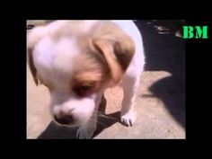 Beautiful Dog Beautiful Dogs, Animals, Cute Dogs, Animales, Animaux, Animal, Animais, Dieren