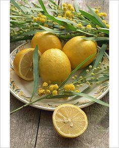 Plate of Lemons and Mimosa Flowers by Michelle Garrett Energy Smoothie Recipes, Energy Smoothies, Energy Drinks, Mimosas, Oranges And Lemons, For Love And Lemons, Lemon Yellow, Lemon Lime, Honey Lemon