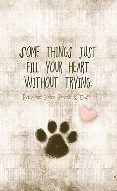 26 Dog Quotes About Love And Compassion Dog Quotes Love, Pet Quotes, Quotes About Pets, Puppy Quotes, Sassy Pants, Pet Loss, Pet Memorials, Service Dogs, Animal Quotes
