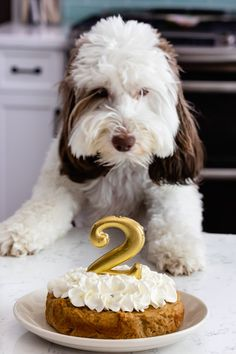 Celebrate your pup with a homemade dog cake for her birthday This easy cake recipe is perfect for dogs with peanut butter and applesauce and whipped cream frosting Your pup will love it recipe easy homemade birthday puppy Dog Cake Recipes, Dog Treat Recipes, Dog Food Recipes, Easy Recipe For Dog Cake, Dog Cake Icing Recipe, Dog Cake Recipe Peanut Butter, Kitchen Recipes, Easy Recipes, Homemade Dog Treats
