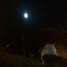 Wow it's moon eclipse tonight!! will never happen again for the next 30 years! so if it'a night for you right now and you can see the moon go outside and watch it, it's not something to miss! currently watching it with mama in the grass while eating apple pie ;3;