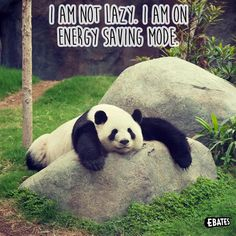 Need a nap after all the PANDAmonium?