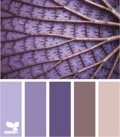 Color leaf palette. Love the purples in this scheme!
