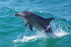 Dolphin......so precious!