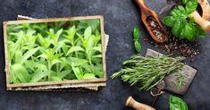 Stevia, la planta más dulce del mundo Stevia, Avocado Toast, Healthy Living, Succulents, Blog, Plants, Natural, Singers, Hot Flashes