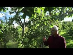 5-acre Canadian permaculture Orchard creates abundance - no fertilizers in 6 years   PowerfulPrimates.com
