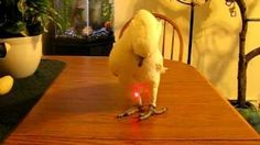 Video of a bird being entertained by a laser pointer. Trending Videos, Beautiful Birds, Pointers, Entertaining, Stylus, Funny, Entertainment