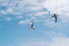 #FranceByLeica Chaque voyage réserve son lot de surprises. @lamecaniquedessens Photo : @alexandrefaraci - #LeicaM10 4200 KM  La Bretagne #skyisthelimit #skydiving #sky #blue #createyourhipe #createexploretakeover #Leicaimages #skyporn #photographylovers #photographeveryday #igersfrance #Bretagne #skymasters_family #sky_perfection #sky_love #birds #bird_lovers #bird_lover #bird_brilliance via Leica on Instagram - #photographer #photography #photo #instapic #instagram #photofreak #photolover…