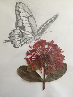 Butterfly drawing pencil art