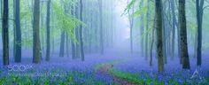 Into the mist.. by antonyz via http://ift.tt/25dtw65